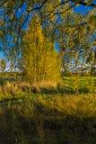 Un paesaggio luminoso di autunno Fotografia Stock