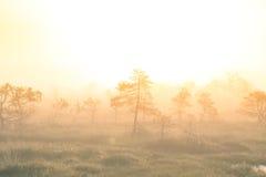 Un paesaggio luminoso e dorato di una palude dopo l'alba Luminoso, luce bianca che versa sopra il paesaggio Immagini Stock Libere da Diritti