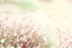 Un paesaggio misterioso con un arcobaleno soleggiato con i fiori e il gra immagini stock libere da diritti