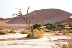 Un paesaggio namibiano immagini stock libere da diritti