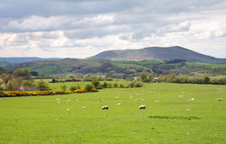 Un paesaggio rurale inglese Immagine Stock