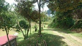Un paesaggio verde piacevole con calcestruzzo urbano lontano fotografia stock libera da diritti