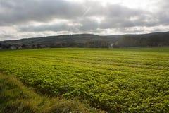 Un paisaje agrícola Foto de archivo libre de regalías