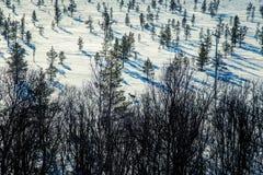 Un paisaje blanco hermoso de un pantano congelado con algunos árboles y montañas Fotos de archivo