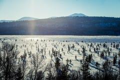 Un paisaje blanco hermoso de un pantano congelado con algunos árboles y montañas Fotografía de archivo libre de regalías