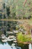 Un paisaje con el pino ramifica, los lirios de agua Imagenes de archivo