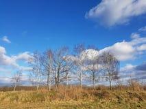 Un paisaje con los árboles de abedul en una zona rural de Berlín en un sunn Foto de archivo libre de regalías