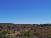 Un paisaje con los arbustos del bleu de la perla Imagen de archivo libre de regalías