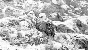 Un paisaje con los cantos rodados de piedra Niebla de Frost Los arbustos se cubren con el foco suave de la helada Foto de archivo