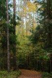 Un paisaje con un abeto del abedul del pino del bosque del otoño Fotos de archivo