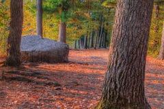 Un paisaje de HDR de un bosque y de una roca grande imagen de archivo libre de regalías
