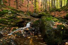 Un paisaje del bosque Imagen de archivo libre de regalías
