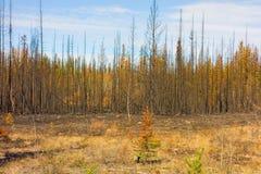 Un paisaje devastó parcialmente por el fuego en Canadá septentrional imagenes de archivo