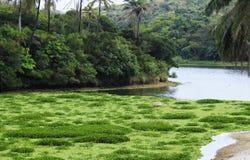Un paisaje donde el verde del color predomina en la imagen fotografía de archivo