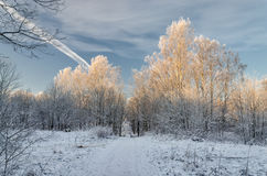 Un paisaje en el día de invierno muy escarchado Imagenes de archivo