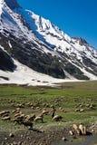 Un paisaje en el paso de Zojila en la altura de 3529 metros, carretera de Leh-Srinagar, Ladakh, la India fotografía de archivo