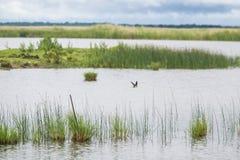 Un paisaje herboso hermoso de la orilla del lago con los tragos de un granero Imagen de archivo libre de regalías