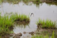 Un paisaje herboso hermoso de la orilla del lago con los tragos de un granero Fotografía de archivo libre de regalías