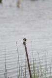 Un paisaje herboso hermoso de la orilla del lago con los tragos de un granero Foto de archivo libre de regalías