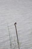 Un paisaje herboso hermoso de la orilla del lago con los tragos de un granero Fotografía de archivo