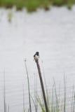 Un paisaje herboso hermoso de la orilla del lago con los tragos de un granero Fotos de archivo