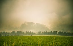 Un paisaje hermoso, colorido, abstracto de la montaña con una neblina caliente del verano en tonalidad verde caliente foto de archivo
