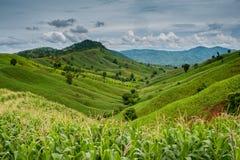 Un paisaje hermoso con la naturaleza de las montañas Fotografía de archivo libre de regalías