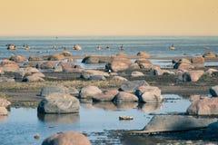 Un paisaje hermoso de la primavera en la playa con una colonia de pájaros Cisnes, cormoranes, gaviotas que se relajan en las pied Imagen de archivo
