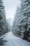 Un paisaje hermoso del bosque de las montañas del invierno con un camino Foto de archivo libre de regalías