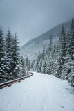 Un paisaje hermoso del bosque de las montañas del invierno con un camino Fotos de archivo libres de regalías