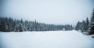 Un paisaje hermoso del bosque de las montañas del invierno con un camino Fotos de archivo