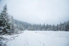 Un paisaje hermoso del bosque de las montañas del invierno con un camino Imagen de archivo