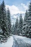 Un paisaje hermoso del bosque de las montañas del invierno con un camino Imágenes de archivo libres de regalías