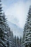 Un paisaje hermoso del bosque del invierno con las montañas en la distancia Fotos de archivo