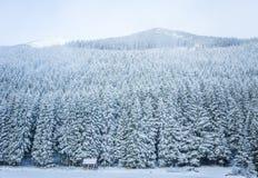 Un paisaje hermoso del invierno con un lago de la montaña en ventisca Foto de archivo