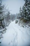 Un paisaje hermoso del invierno con un lago de la montaña en ventisca Imagen de archivo