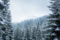 Un paisaje hermoso del invierno con un lago de la montaña en ventisca Imagenes de archivo