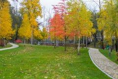 Un paisaje hermoso del otoño de un día nublado en un parque con los abedules vestidos hermosos con follaje rojo amarillento Fotografía de archivo libre de regalías