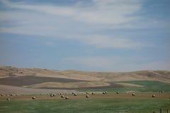Un paisaje hermoso del verano en Idaho Imagen de archivo libre de regalías