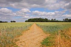 Un paisaje inglés del verano del trigo de maduración Foto de archivo libre de regalías