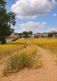 Un paisaje inglés del verano del trigo de maduración Imagen de archivo libre de regalías