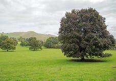 Un paisaje montañoso en Staffordshire, Inglaterra con un árbol como punto focal Imagen de archivo libre de regalías