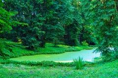 Un paisaje pintoresco del bosque con un pequeños pantano y árbol verdes Fotos de archivo libres de regalías