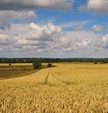 Un paisaje rural inglés Fotos de archivo