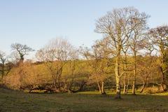 Un paisaje típico del pleno invierno en las pequeños colinas y valles del condado abajo Irlanda del Norte con luz del sol suave y Imágenes de archivo libres de regalías
