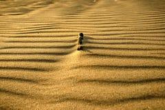 Un palillo de madera en la arena Fotografía de archivo