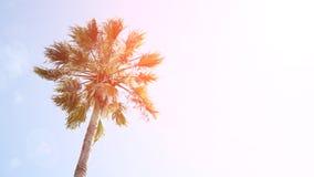 Un palmier sur le fond de ciel bleu Images stock