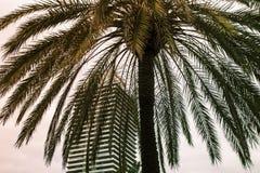 Un palmier tropical sur le fond du ciel et du gratte-ciel, Photos stock