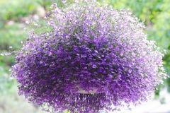 Un panier accrochant de grande boule florale photo libre de droits