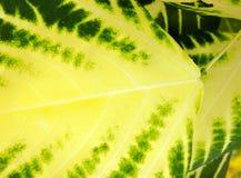 Un pannello dei colori di verde e di giallo fotografia stock